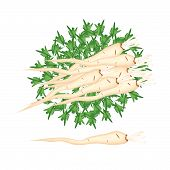 stock photo of parsnips  - Vegetable and Herb An Illustration Stack of Fresh Parsley or Parsnip with Root on Leaves Used for Seasoning in Cooking - JPG
