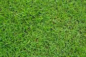 Green grass of texture for background