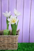 Beautiful tulips in wicker basket, on green grass on color wooden background