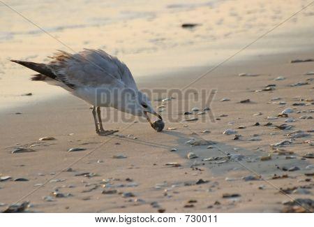 Gull Holding Shell