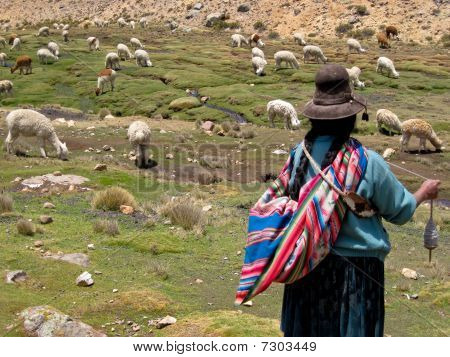 Woman with Lamas, South America