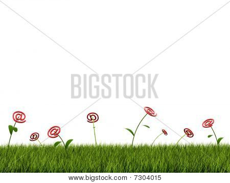 Flower with email sign on green grass