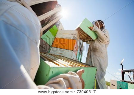 Low angle view beekeepers unloading honeycomb boxes together from truck at apiary