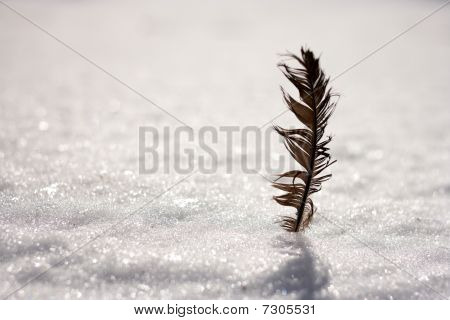 bird crow feather on a background of white snow