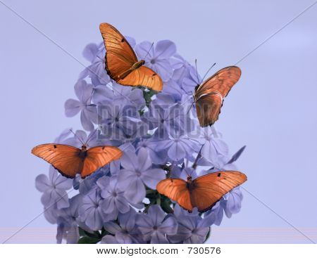 Purple Flower And Butterflies