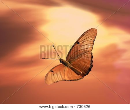 Sunset With Butterfly