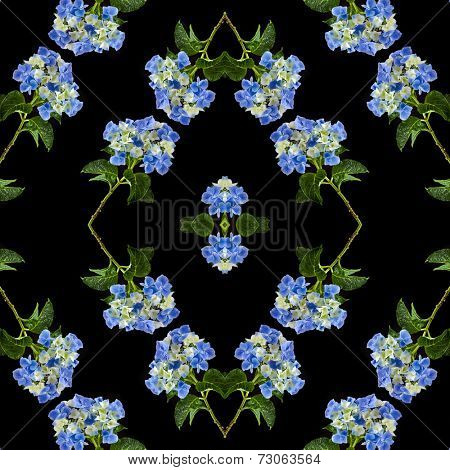 Hydrangea Hortensia Flower with water drops, abstract decor card  Isolated on black background