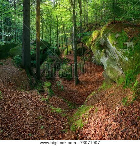 Summer landscape with fairy forest. Green moss on stones and trees. Carpathians, Ukraine, Europe