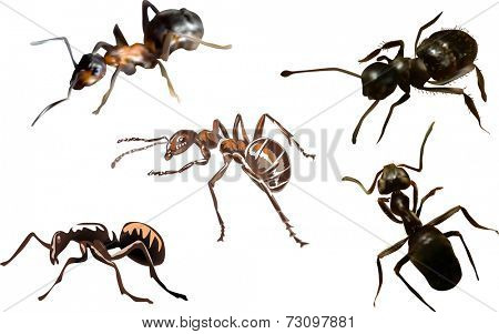 illustration with ants isolated on white background