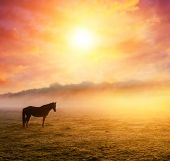 picture of pastures  - Arabian horses grazing on pasture at sundown in orange sunny beams - JPG