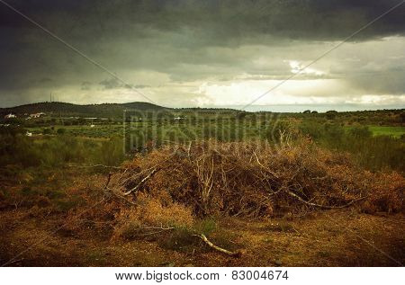 Beautiful countryside landscape with dry branches on the ground
