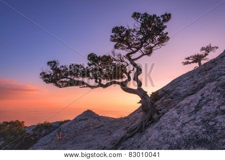 Tree on rock in Crimea