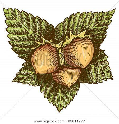 Three hazelnut