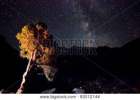 milky way above the mountains with tree highlighted