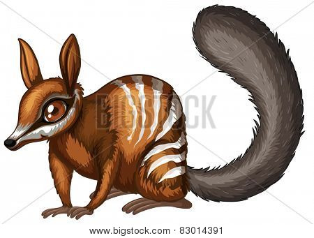 Illustration of a close up numbat