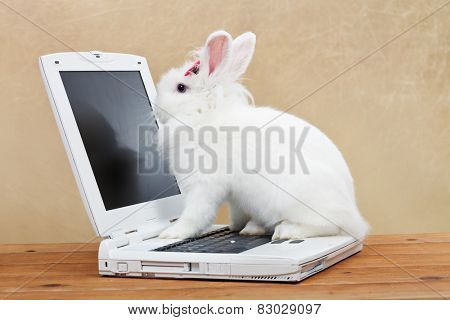 Cute bunny studies computer technology - sitting on laptop