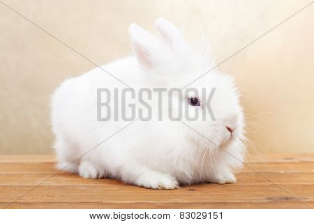 Cute white rabbit on wooden surface against golden background- shallow depth of field