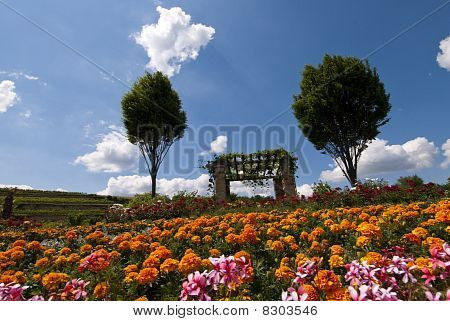 Flowered Field In Bad Duerkheim, Palatinate, Germany
