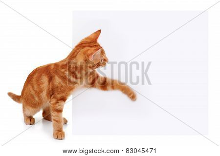 Pet Cat Sign