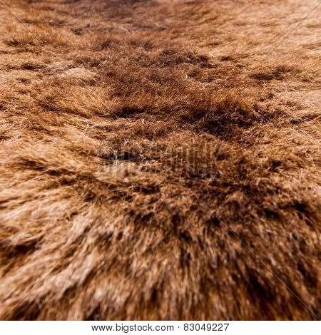 fur texture close-up background on the white backgrounds