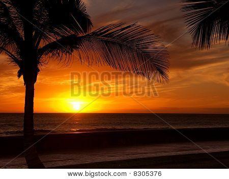 Canary Sunset