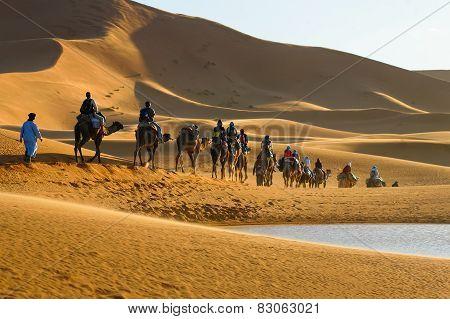 Caravan Of Tourists