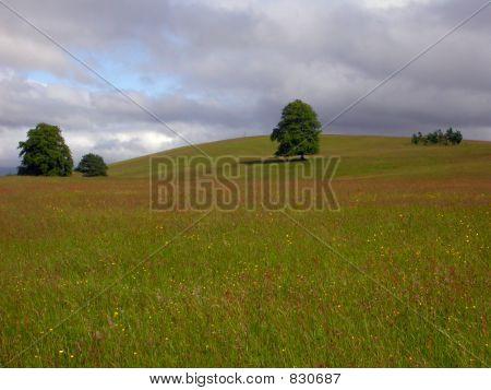 Irish Field