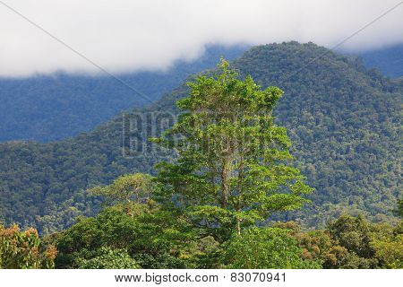Exotic rainforest landscape