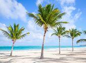 foto of atlantic ocean beach  - Palm trees grow on empty sandy beach - JPG