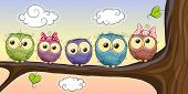 image of owls  - Five Cute Owls is sitting on a brunch - JPG