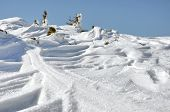 stock photo of juniper-tree  - Snow covered junipers at winter in a sunny day - JPG