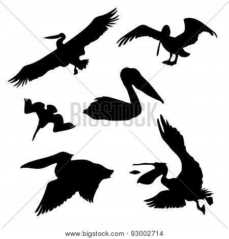 Pelican set vector