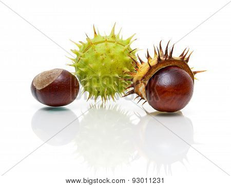 Ripe Fruit Chestnut Closeup On A White Background With Reflection
