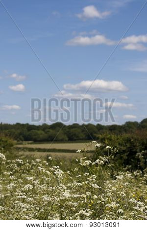 English Countryside, Holmer Green, Buckinghamshire
