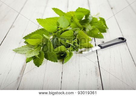 lemon balm branches and kitchen knife on white wooden rustic background