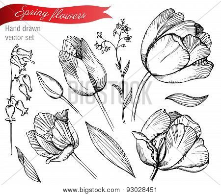 Vector set of graphic spring flowers (tulips forget-me-not). Elements for design.