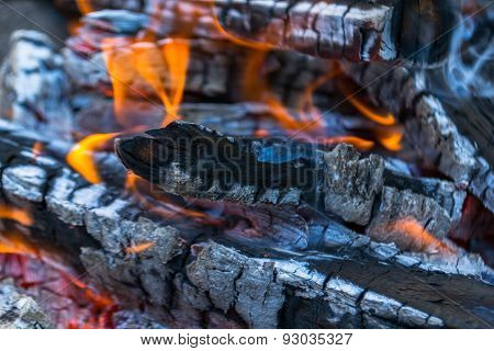 Fire and barbecue