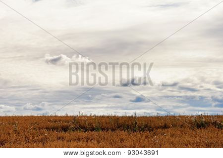 Beautiful Sky In The Clouds And The Field Of Gold Color In Autumn