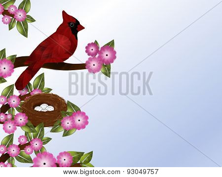 Cardinal on Flowering Tree with Nest