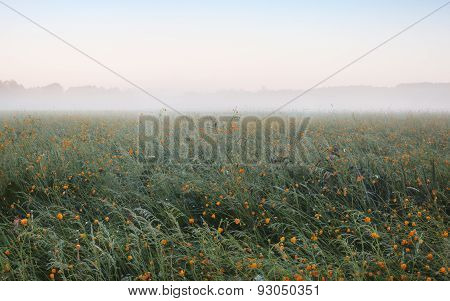 Landscape In Meadow In Mist