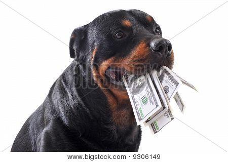 Rottweiler und US-Dollar