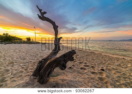Braided Tree On Beach At Sunset