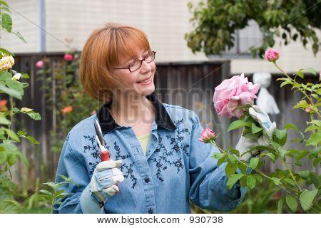 Woman Cut Roses In Garden