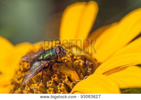 Green Bottle on Chrysanthemum