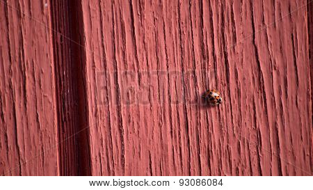 Ladybug Crawling On Old Red Wall, Letterbox Size
