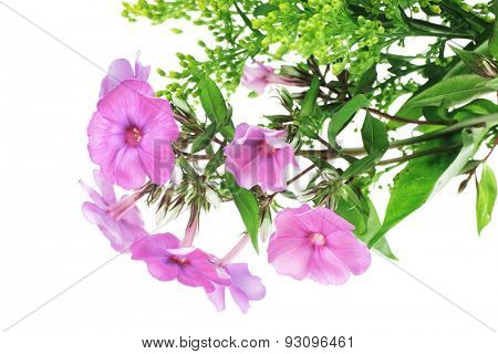 flowers : small bouquet of pansy flowers with green grass isolated over white background