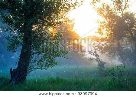 Early morning landscape in forest