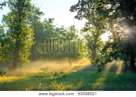 Nice morning landscape in forest