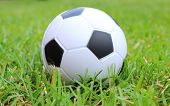 picture of stress-ball  - Small black and white stress ball lying on the green grass soccer ball on the grass - JPG