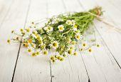stock photo of bundle  - Bundled chamomile twigs on rustic wooden white background - JPG